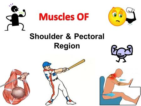 Shoulder & Pectoral Region. Objectives  Know the landmarks of the bony structures of the shoulder and axillary regions.  Discuss the muscles of pectoral.