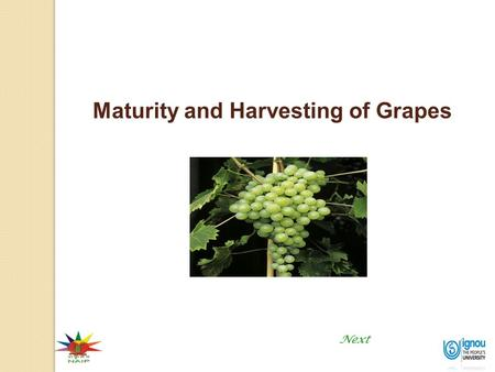 1 Maturity and Harvesting of Grapes Next. Maturity and Harvesting of Grapes 2 Introduction Maturity and Harvesting of Grapes Grape is a non-climacteric.