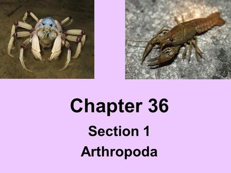 Chapter 36 Section 1 Arthropoda.