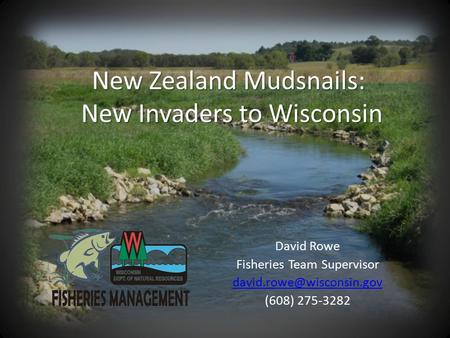 New Zealand Mudsnails: New Invaders to Wisconsin David Rowe Fisheries Team Supervisor (608) 275-3282.
