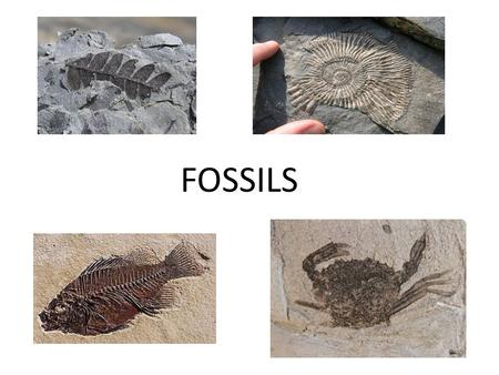 FOSSILS. Geologic Time Know this - A fossil is the naturally preserved remains or traces of animals or plants that lived in the geologic past. There are.