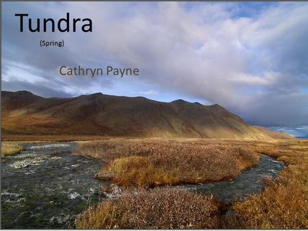Tundra Cathryn Payne (Spring). Climate  The temperatures in the tundra are extremely low. Only a few weeks at most have temperatures above freezing.