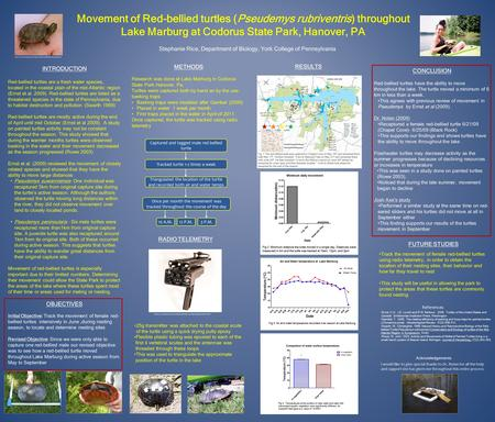 Movement of Red-bellied turtles (Pseudemys rubriventris) throughout Lake Marburg at Codorus State Park, Hanover, PA Stephanie Rice, Department of Biology,