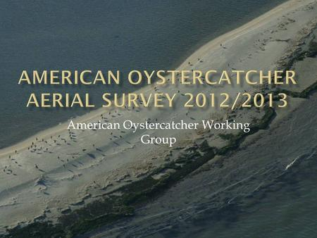 American Oystercatcher Working Group.  Timeframe: January/early February 2013  Follows protocol from 2003 survey with key modifications  Survey windows: