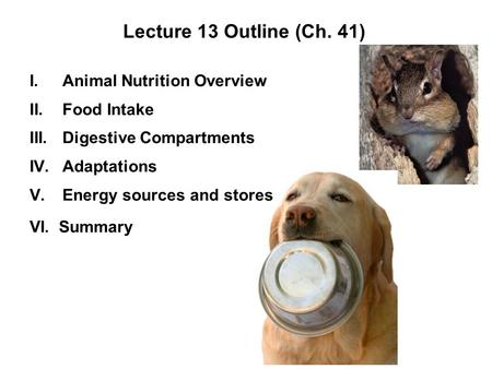 Lecture 13 Outline (Ch. 41) I.Animal Nutrition Overview II.Food Intake III.Digestive Compartments IV.Adaptations V.Energy sources and stores VI. Summary.