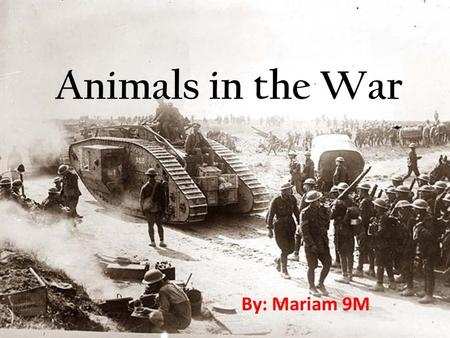 Animals in the War By: Mariam 9M. Introduction… Animals have been used in war when humans learned how to train them. Since the ancient times humans came.