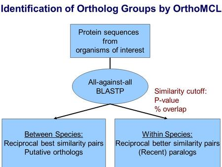 Identification of Ortholog Groups by OrthoMCL Protein sequences from organisms of interest All-against-all BLASTP Between Species: Reciprocal best similarity.