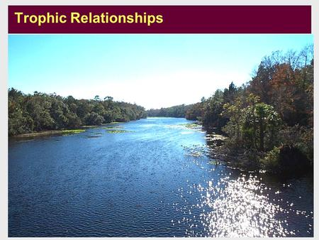 Developed by: Merrick, Richards Updated: August 2003 U1-m4-s1 Trophic Relationships.