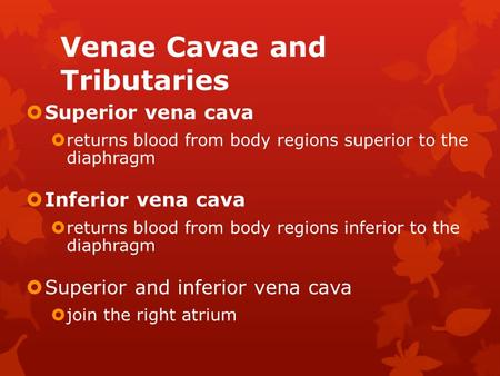 Venae Cavae and Tributaries  Superior vena cava  returns blood from body regions superior to the diaphragm  Inferior vena cava  returns blood from.