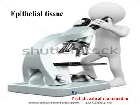 . Lecture [2] By Prof. dr. ashraf mahmoud m Epithelial tissue.