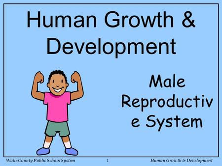 Wake County Public School SystemHuman Growth & Development 1 Male Reproductiv e System Human Growth & Development.