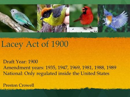 Lacey Act of 1900 Draft Year: 1900 Amendment years: 1935, 1947, 1969, 1981, 1988, 1989 National: Only regulated inside the United States Preston Crowell.