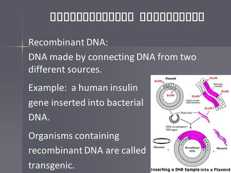 Biotechnology Techniques Recombinant DNA: DNA made by connecting DNA from two different sources. Example: a human insulin gene inserted into bacterial.