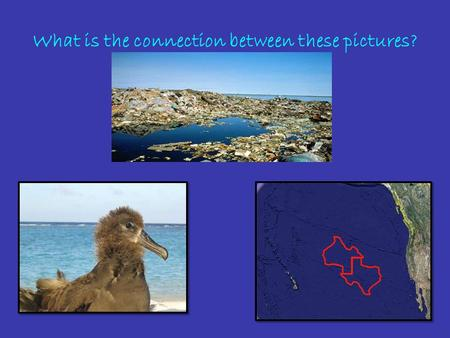 What is the connection between these pictures?. The Great Pacific Garbage Patch.