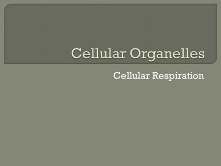 Cellular Respiration. The Cell  Microtubules  Microfilaments.