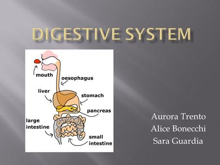 Aurora Trento Alice Bonecchi Sara Guardia. The digestive system is the system that absorbs the nutrients from the food that we eat, so our cells can do.