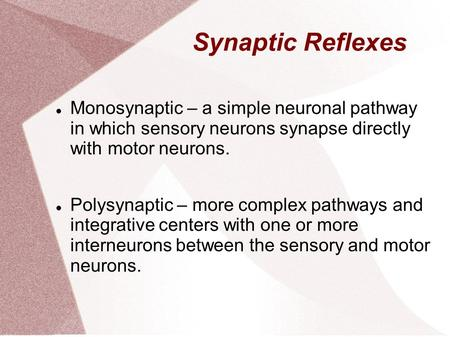 Synaptic Reflexes Monosynaptic – a simple neuronal pathway in which sensory neurons synapse directly with motor neurons. Polysynaptic – more complex pathways.