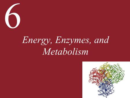 6 Energy, Enzymes, and Metabolism. 6 Energy, Enzymes, and Metabolism 6.1 What Physical Principles Underlie Biological Energy Transformations? 6.2 What.
