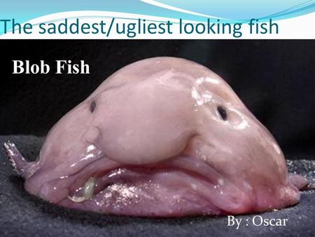 The saddest/ugliest looking fish Blob Fish By : Oscar.