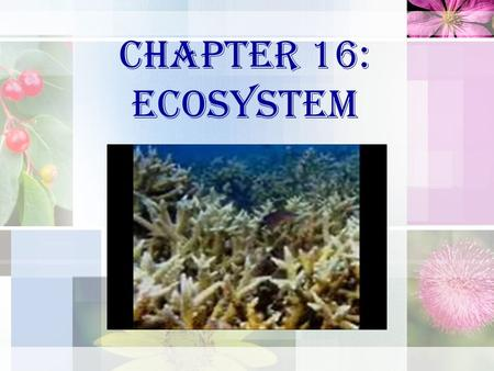Chapter 16: ECOSYSTEM. Definition of Ecosystem: Related to ecologi system, i.e. interaction process between living things and non-living things existed.