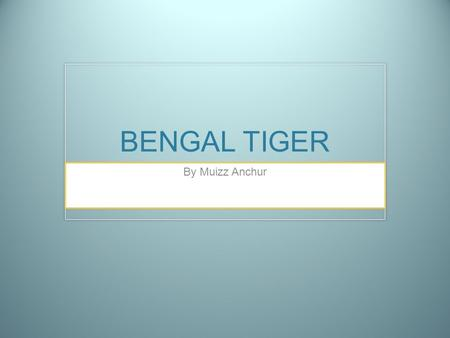BENGAL TIGER By Muizz Anchur.