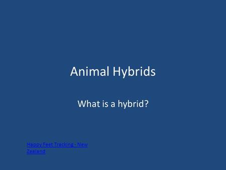 Animal Hybrids What is a hybrid? Happy Feet Tracking - New Zealand.