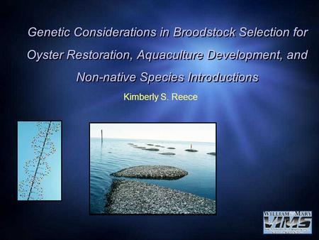 Genetic Considerations in Broodstock Selection for Oyster Restoration, Aquaculture Development, and Non-native Species Introductions Kimberly S. Reece.