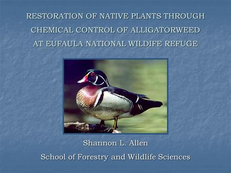 ٥ RESTORATION OF NATIVE PLANTS THROUGH CHEMICAL CONTROL OF ALLIGATORWEED AT EUFAULA NATIONAL WILDIFE REFUGE Shannon L. Allen School of Forestry and Wildlife.