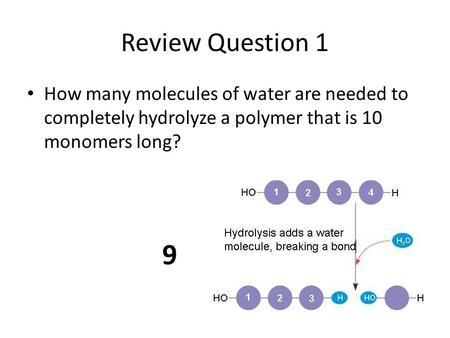 Review Question 1 How many molecules of water are needed to completely hydrolyze a polymer that is 10 monomers long? 9.