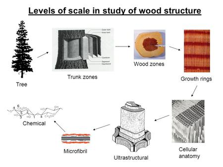 Tree Trunk zones Wood zones Growth rings Cellular anatomy Microfibril Chemical Ultrastructural Levels of scale in study of wood structure.