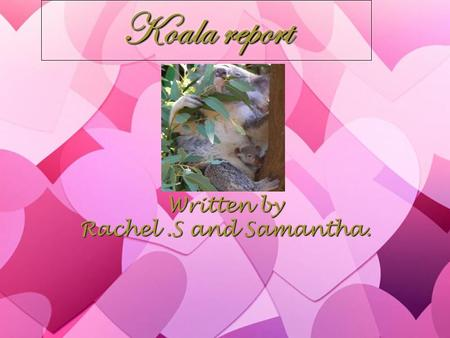 Koala report Written by Rachel.S and Samantha. Written by Rachel.S and Samantha.