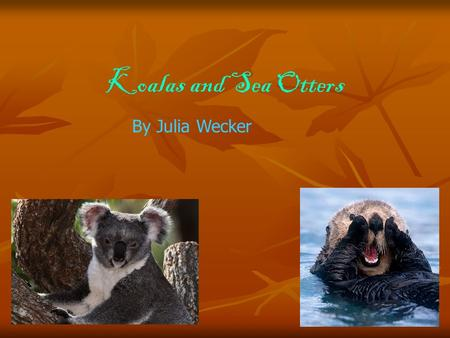 Koalas and Sea Otters By Julia Wecker. Koalas eat eucalyptus leaves which is their favorite food. A lot of people think koalas are cute bears. But their.