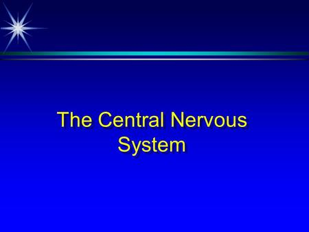 The Central Nervous System. Neuron è The basic functional unit of the CNS è Exhibits excitability è Exhibits conductivity.