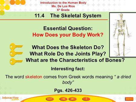 11.4 The Skeletal System Essential Question: How Does your Body Work? What Does the Skeleton Do? What Role Do the Joints Play? What are the Characteristics.