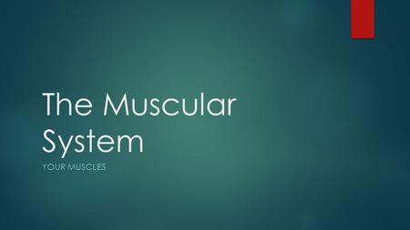 The Muscular System YOUR MUSCLES. Functions of the Muscular System  A muscle is made of strong tissue that can contract in an orderly way.  When a muscle.