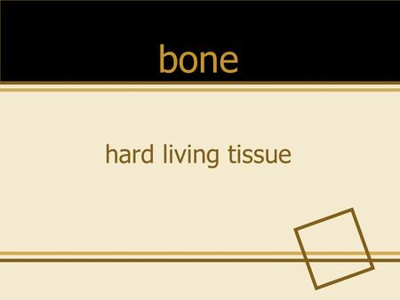 Hard living tissue bone. the group of bones that forms the frame for your body skeleton.