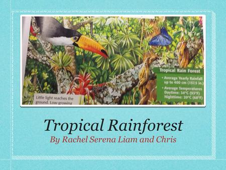 Tropical Rainforest By Rachel Serena Liam and Chris.