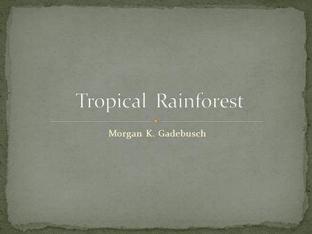 Morgan K. Gadebusch. Millions of plants and animals live in the Rainforest ecosystem. Animals and plants form a food chain. Animals rely on trees and.