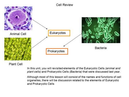 Cell Review Eukaryotes Animal Cell Bacteria Prokaryotes Plant Cell