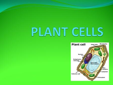 .. Plant cells can vary in shape, size, and function but they all have features in common. With a microsope these are the things you could see: Cell Wall.