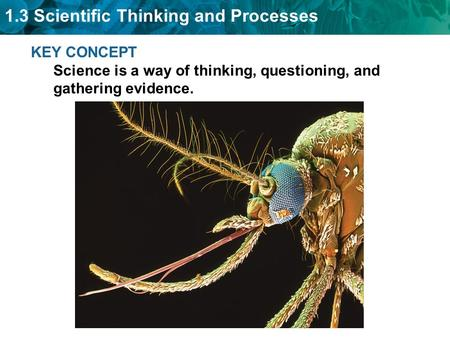 1.3 Scientific Thinking and Processes KEY CONCEPT Science is a way of thinking, questioning, and gathering evidence.