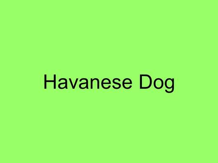 Havanese Dog. Table of Contents 1 Food 2 Babies 3 Habitat 4 Description 5 Interesting Facts 6 Ending Comment 7 Credits.