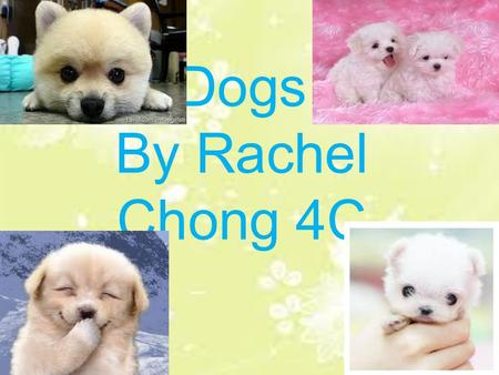 Dogs By Rachel Chong 4C. Contents Appearance…………………..……….P.1 Where do they live?.................P.2 What can they do?...................P.3 What do they.