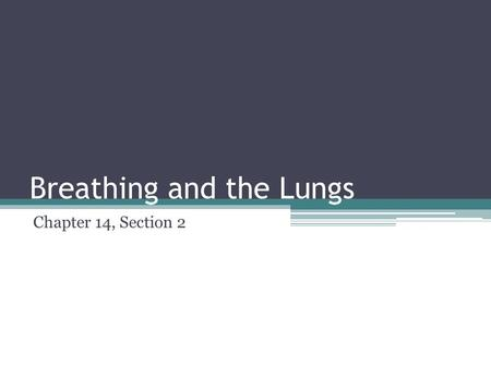 Breathing and the Lungs