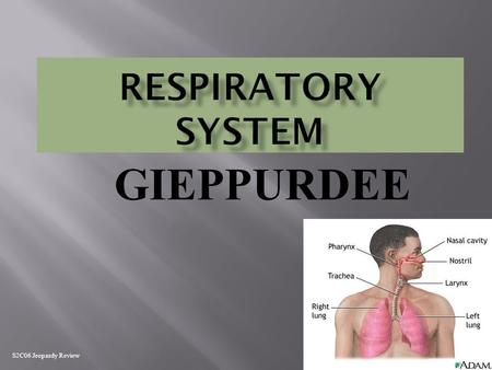 GIEPPURDEE S2C06 Jeopardy Review Gas Exchange Respiratory Systems Breathing Gas Transport Random 100 200 300 400 500.