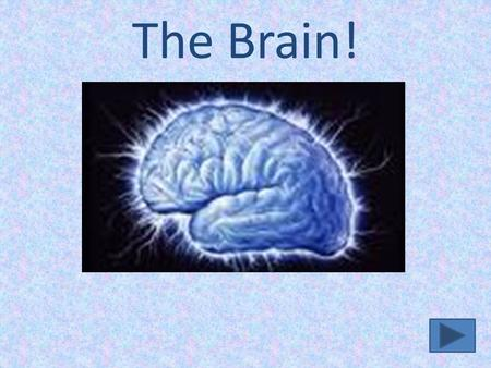 The Brain!. The Brain Facts About the Brain Brain Lobes & Functions How the Brain is Studied How the Brain is Studied Resources Concept Map Author's Slide.