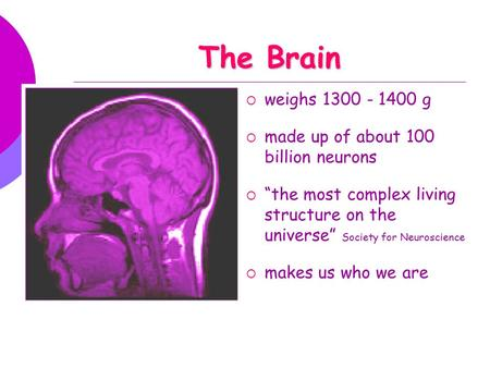 "The Brain  weighs 1300 - 1400 g  made up of about 100 billion neurons  ""the most complex living structure on the universe"" Society for Neuroscience."