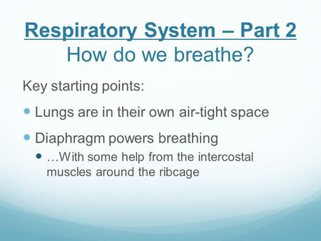 Respiratory System – Part 2 How do we breathe? Key starting points: Lungs are in their own air-tight space Diaphragm powers breathing …With some help from.