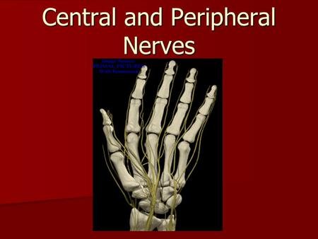 Central and Peripheral Nerves. Spinal Cord Gray Matter White Matter.