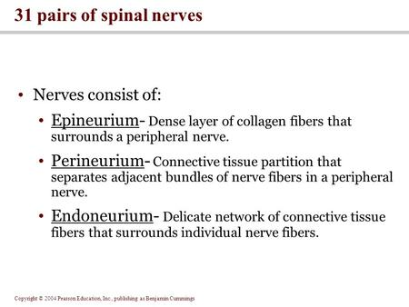 31 pairs of spinal nerves Nerves consist of: